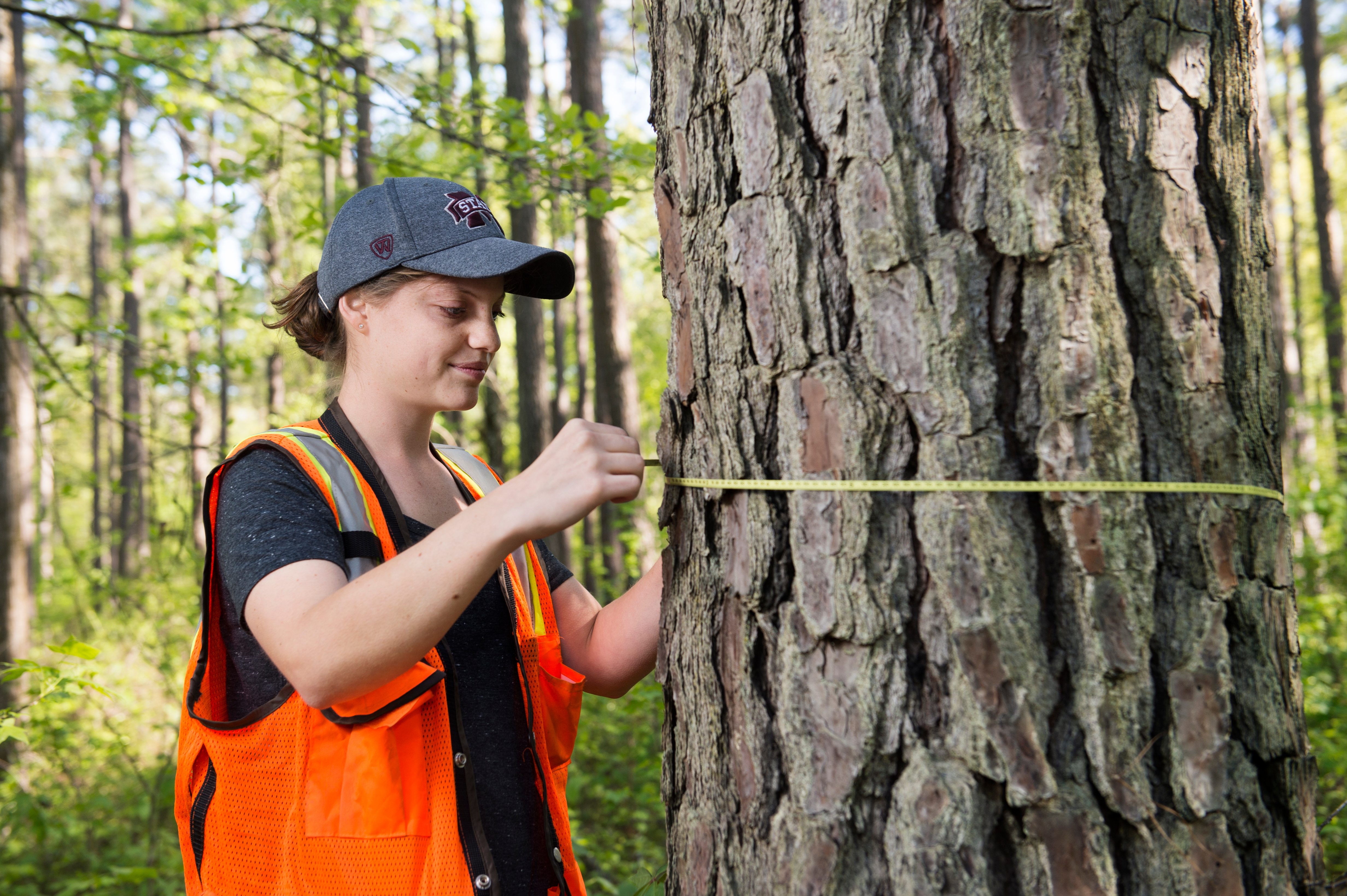 Samantha Seamon measuring tree